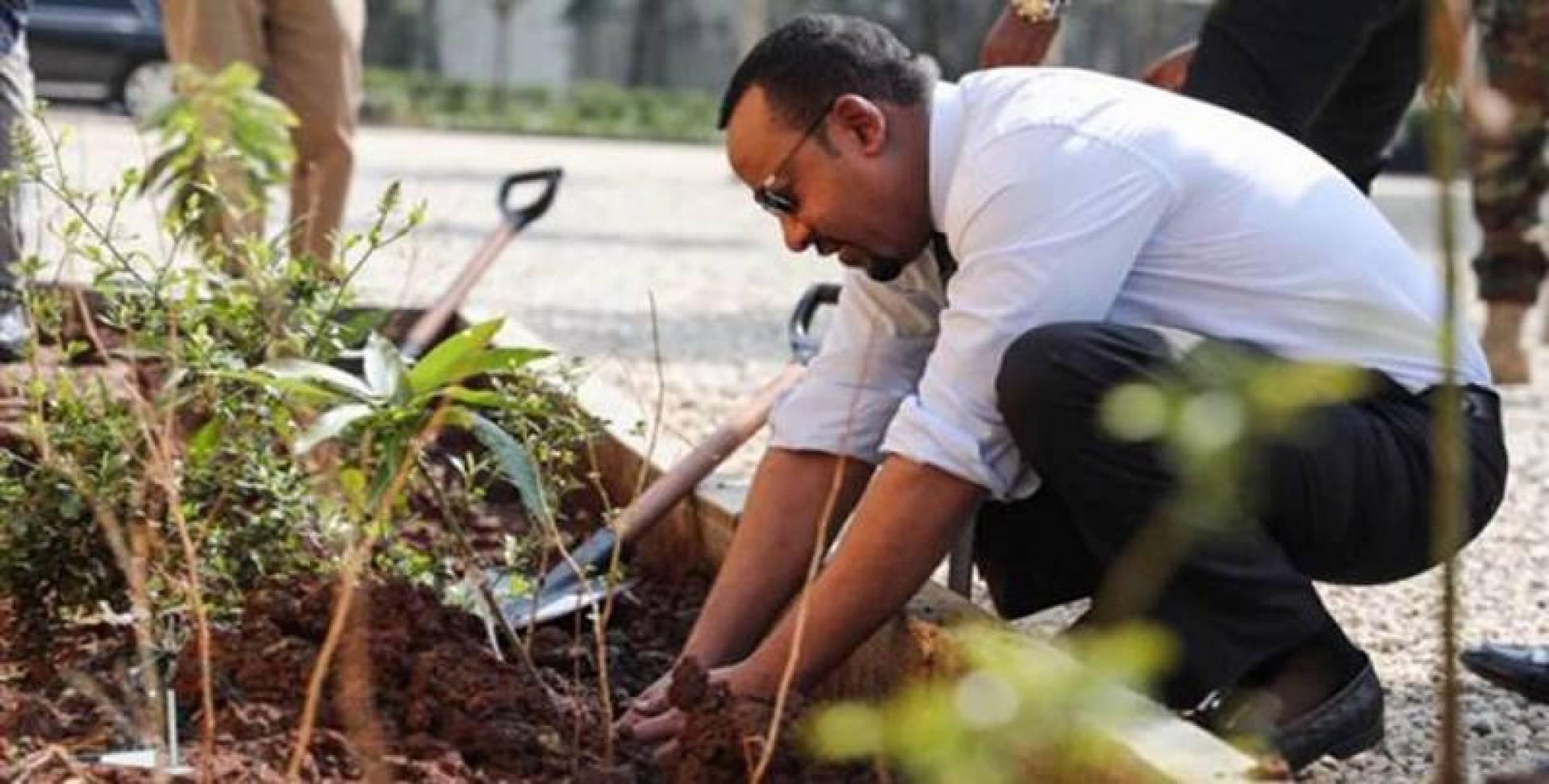 زراعة 200 مليون شجرة في يوم واحد بأثيوبيا