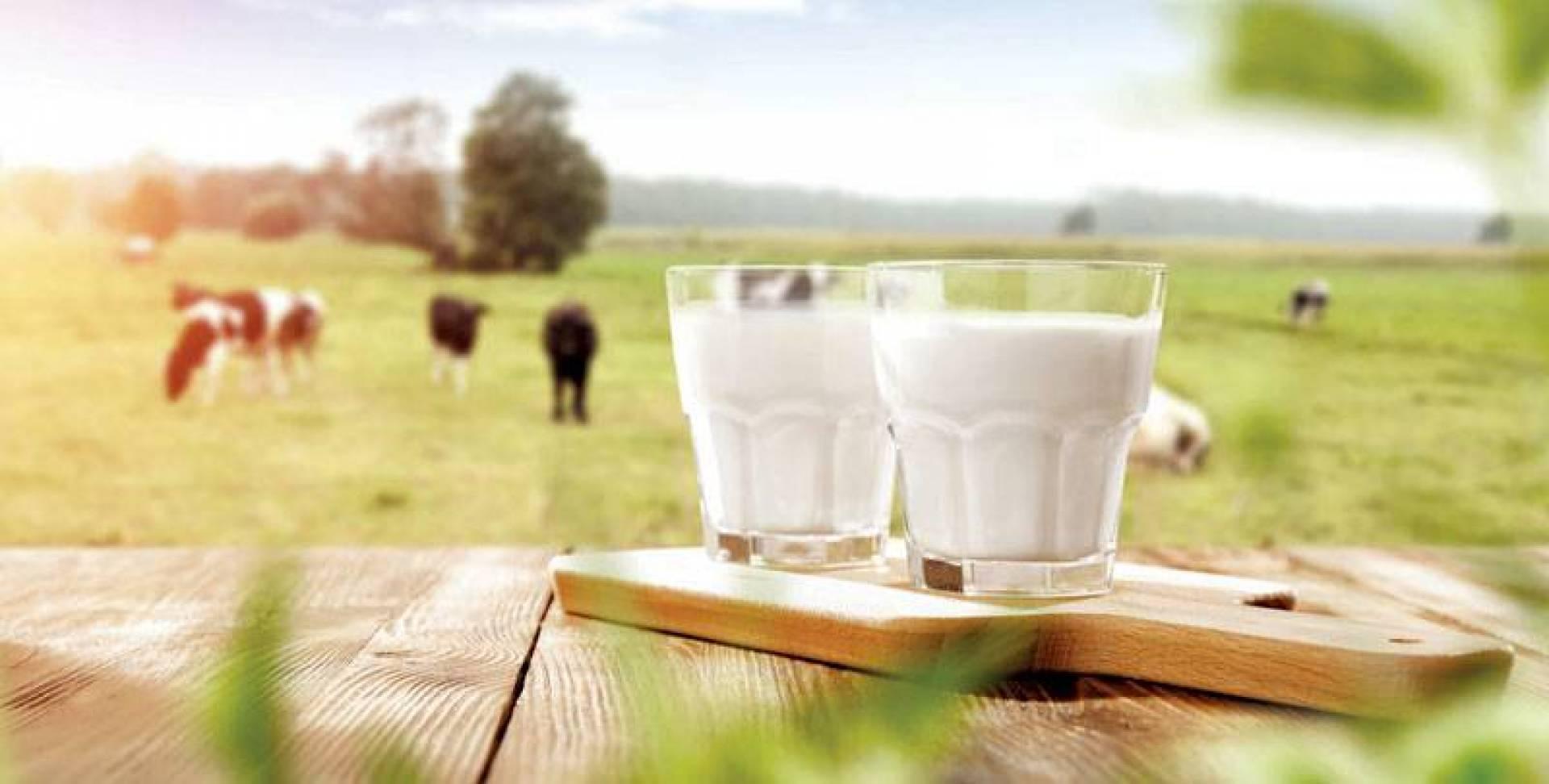 الحليب.. يحوي أدوية الأبقار وهرموناتها