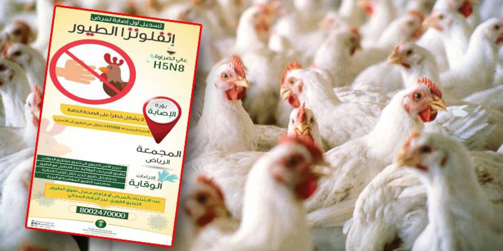 السعودية: تسجيل إصابة بإنفلونزا الطيور بالرياض لا يشكل خطراً