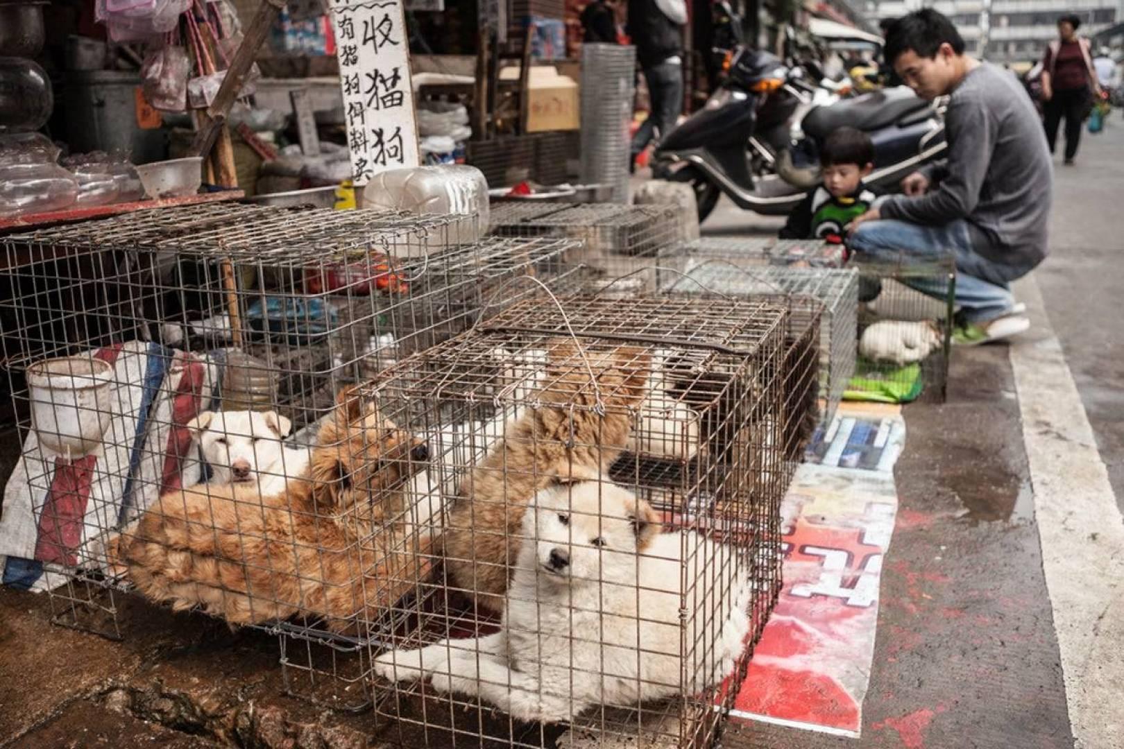 الصين تمنع كلياً تجارة الحيوانات البرية وأكلها