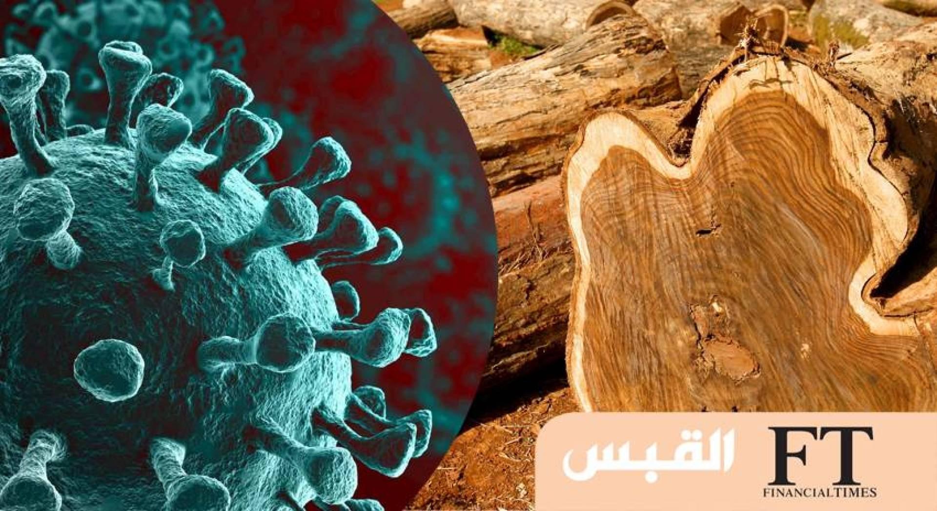 كيف يؤثر قطع الغابات في انتشار فيروسات قاتلة.. مثل «كورونا»؟