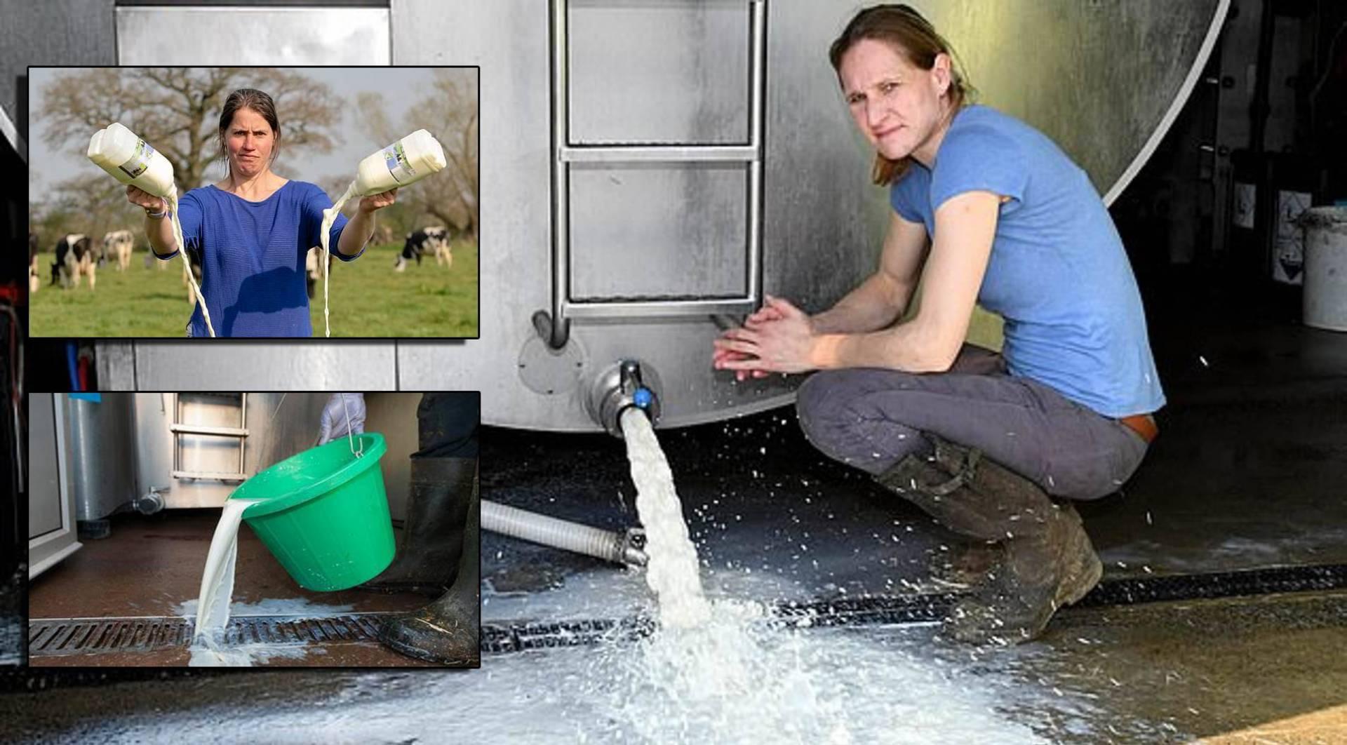 «كورونا» يدفع المزارعين.. إلى التخلص من الحليب في المجاري!
