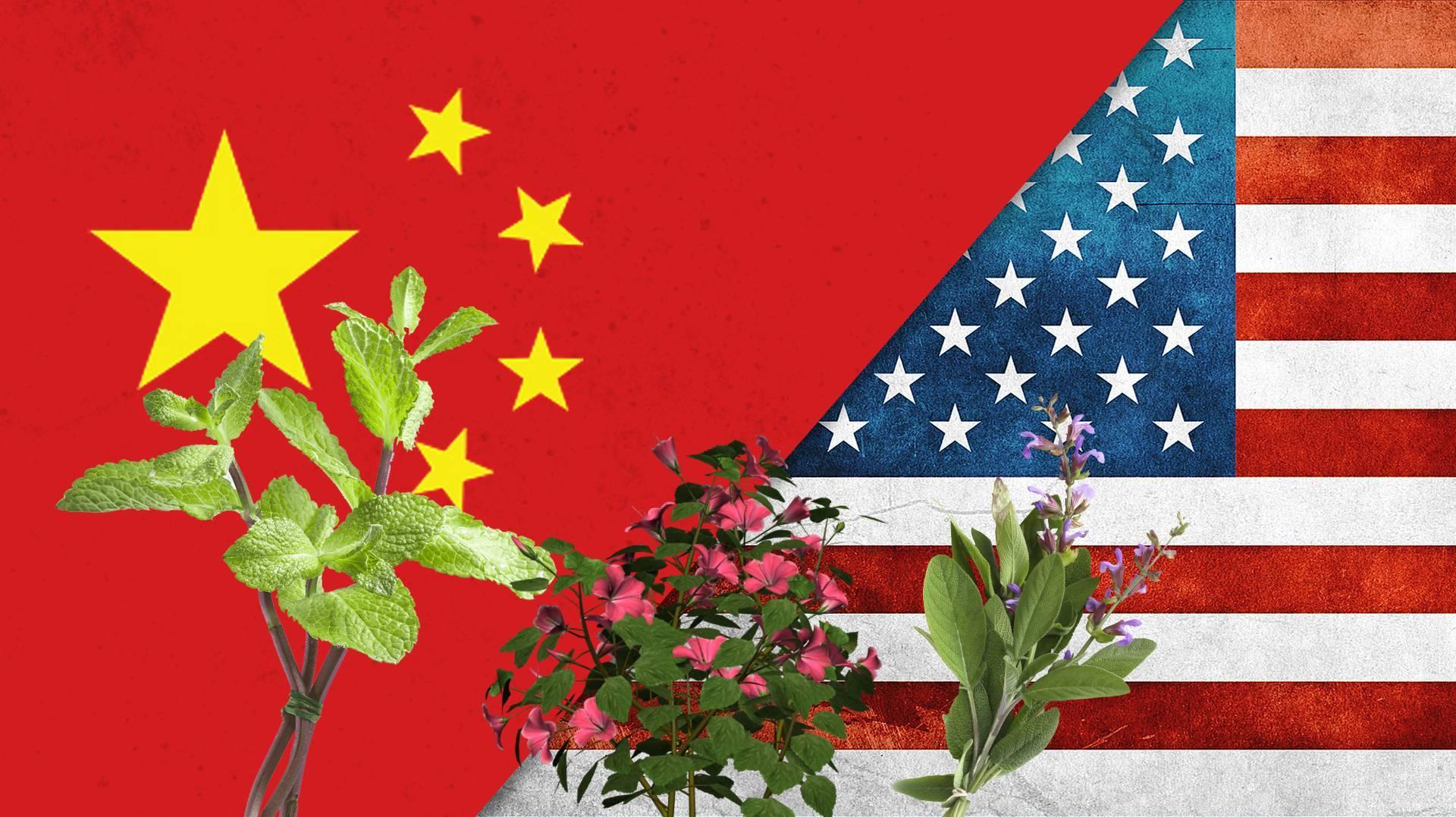 لماذا ترسل الصين الكركديه والمرامية والنعناع.. إلى المواطنين الأميركيين؟