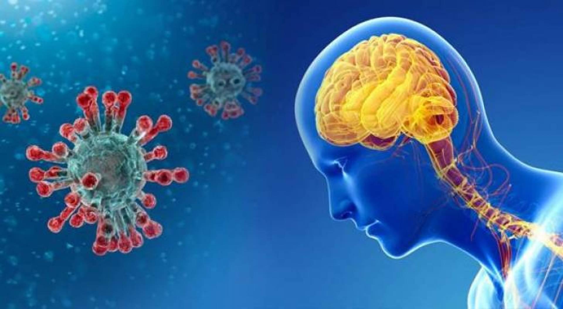 دراسة أميركية: فيروس كورونا قادر على مهاجمة الدماغ بشكل مباشر