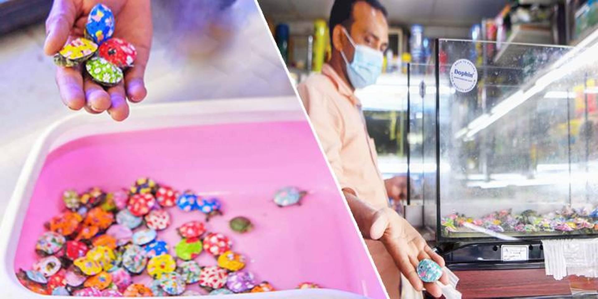 بائع مستعرضاً سلحفاة ملونة - ألوان زاهية.. ولكن في بيئة غير مناسبة! (تصوير: محمود الفوريكي)