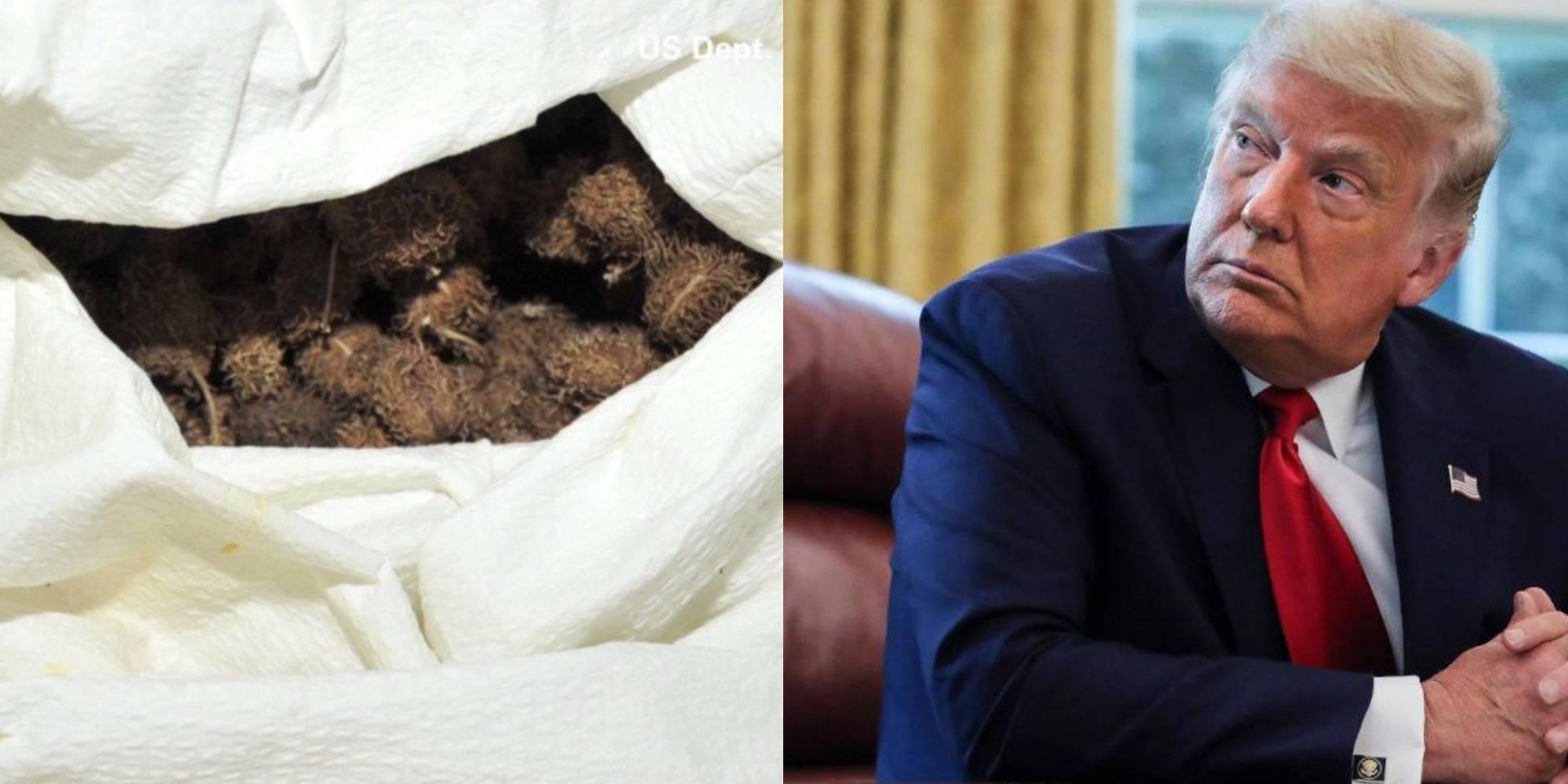 سي إن إن: نجاة ترامب من محاولة اغتيال بمادة «الريسين»