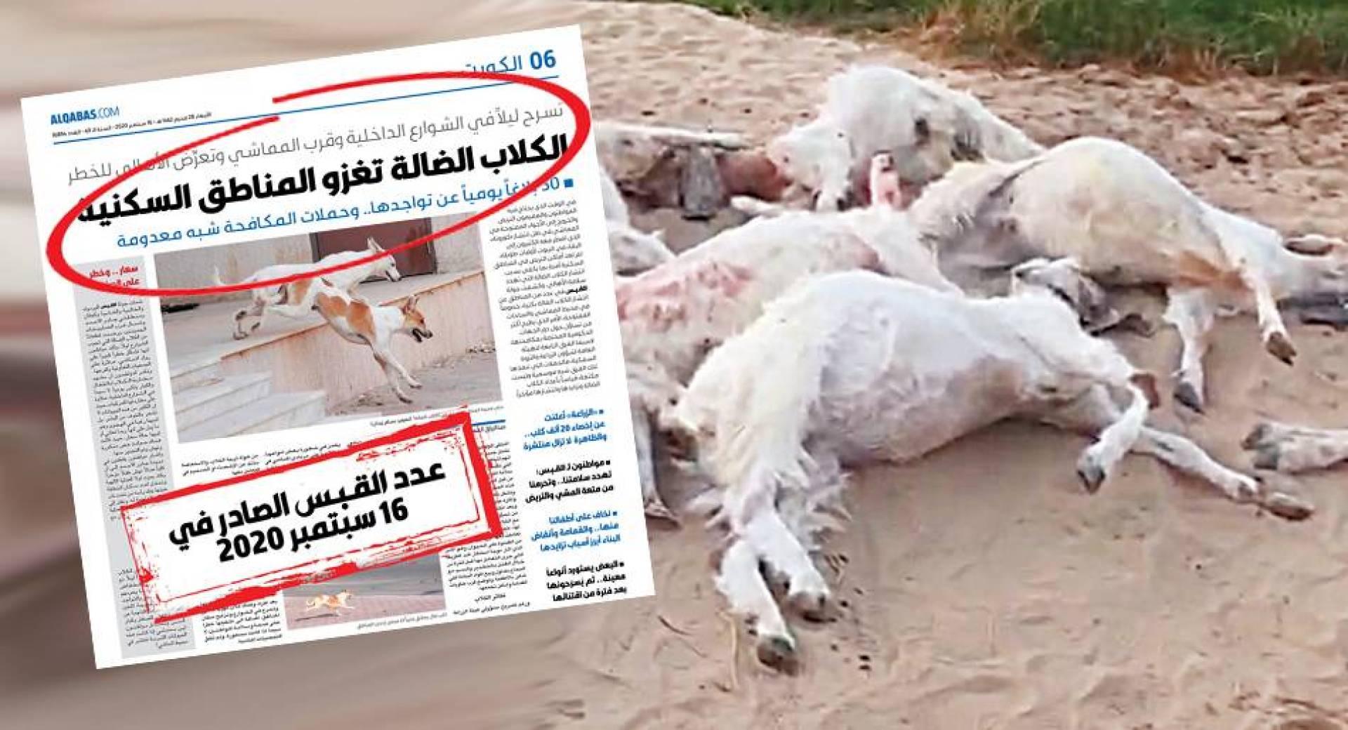الكلاب ذبحت الحلال