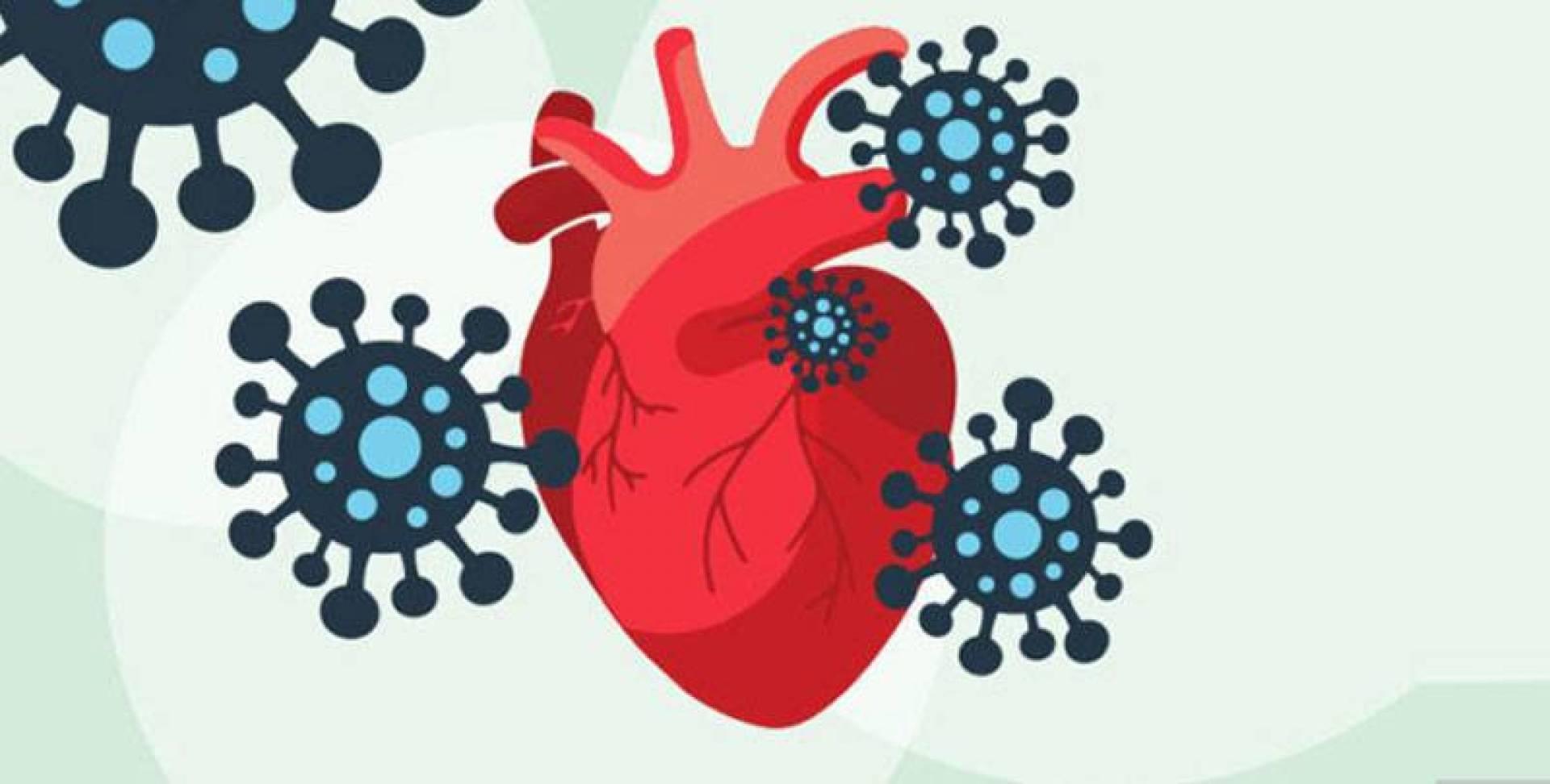 دراسة: «كورونا» يغزو خلايا القلب