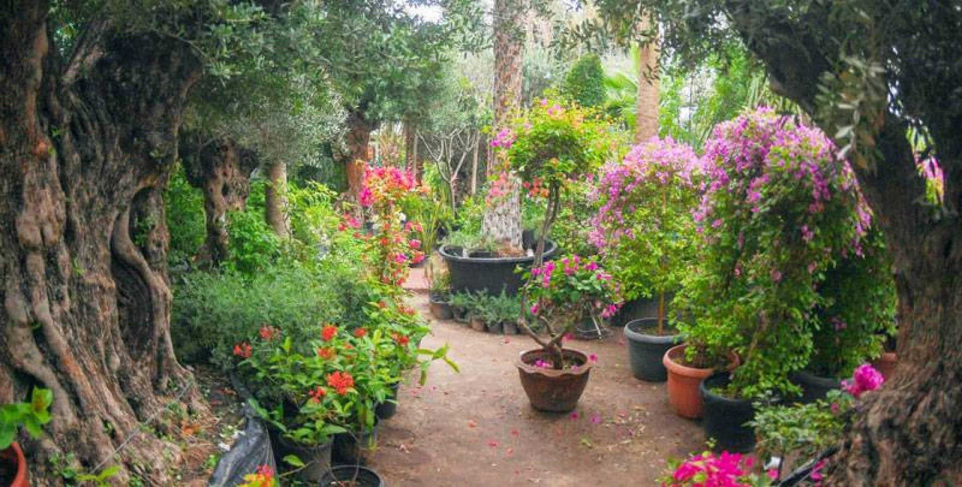 مبيعات الزهور والنباتات تعافت في اكتوبر الماضي (تصوير: محمود الفوريكي)