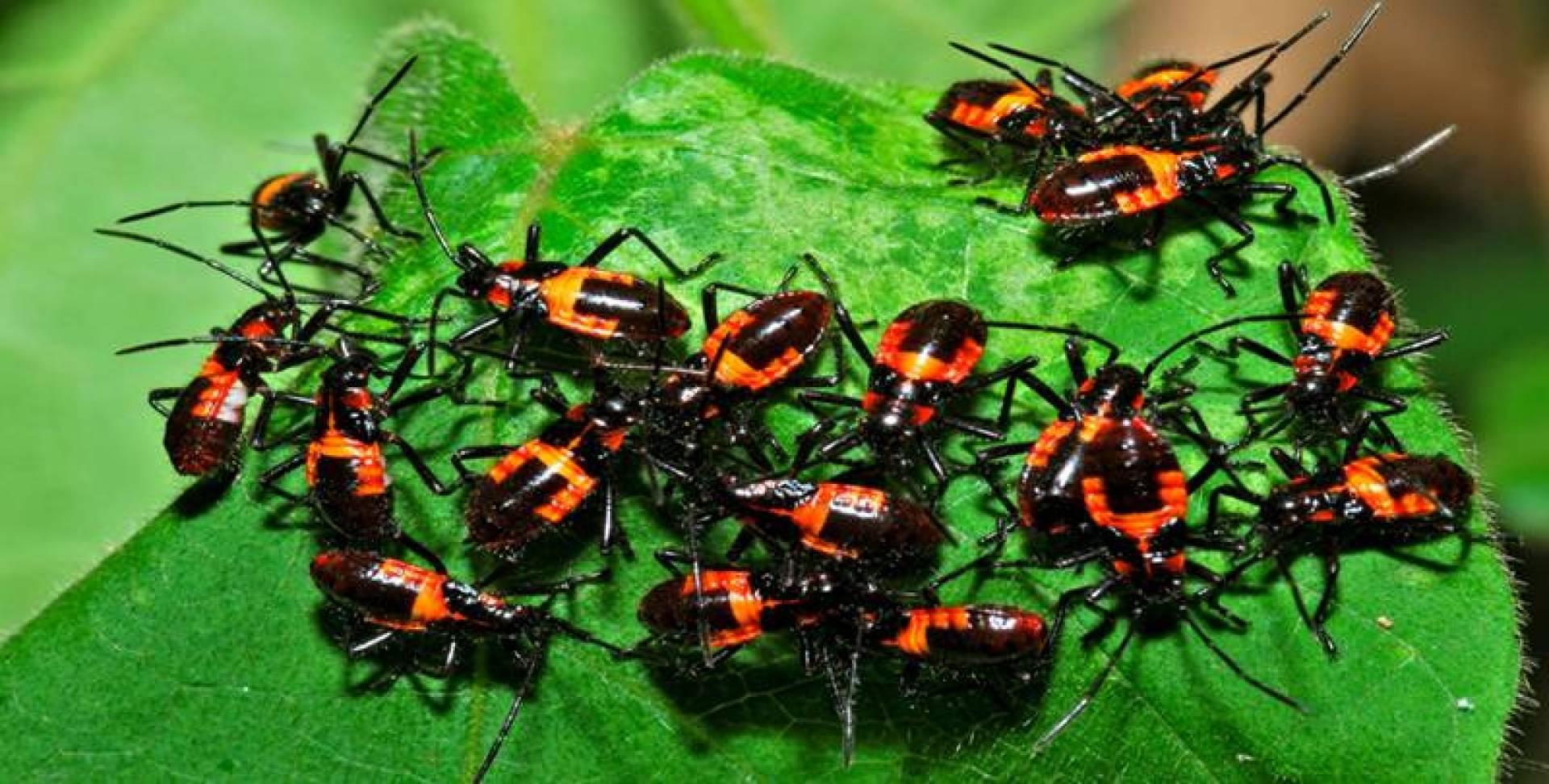ماذا لو اختفت الحشرات ؟